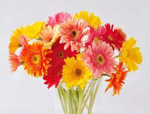 Các kiểu cắm hoa cúc vàng