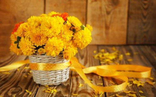 hoa cúc vàng tuyệt đẹp với nhiều màu sắc
