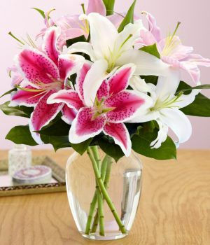 Cách làm hoa ly nở nhanh và đẹp