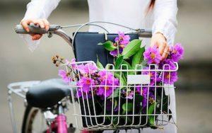Ý nghĩa của hoa bằng lăng – tình yêu ngây thơ