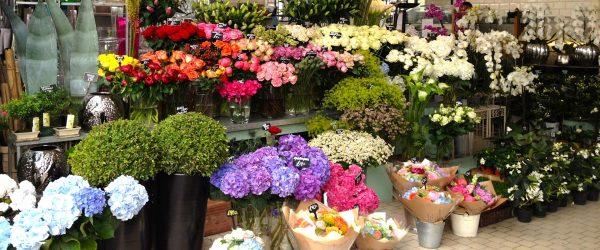 Bật mí cách chưng hoa lâu tàn đến cả tuần