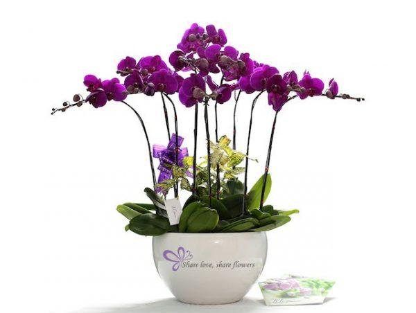 Các loại hoa trang trí phòng khách đẹp lung linh (P2)