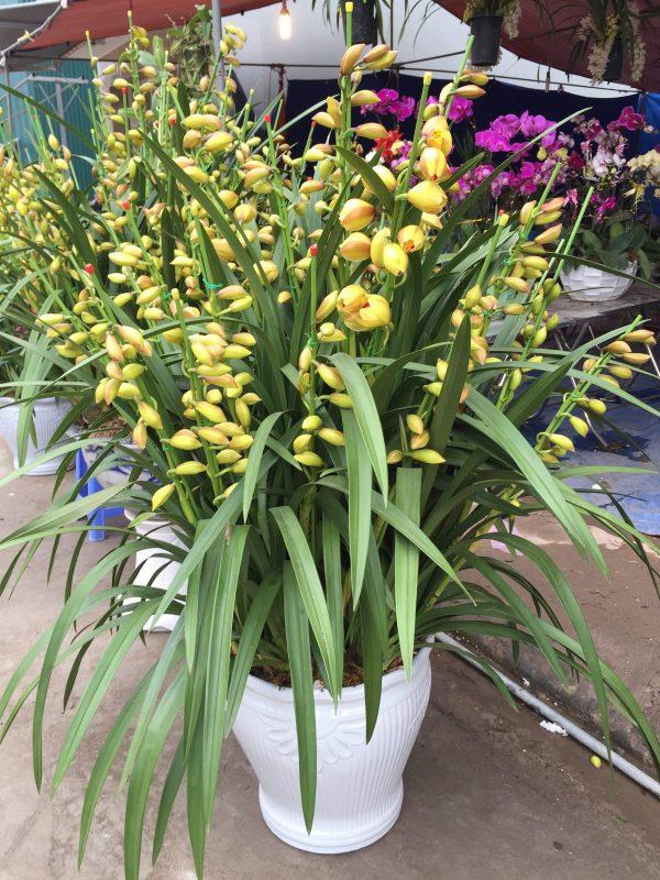 Đặc điểm và cách chăm sóc hoa địa lan đúng cách
