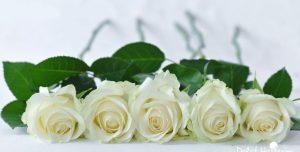 Top 3 loài hoa xin lỗi chân thành dành tặng mẹ/bạn gái
