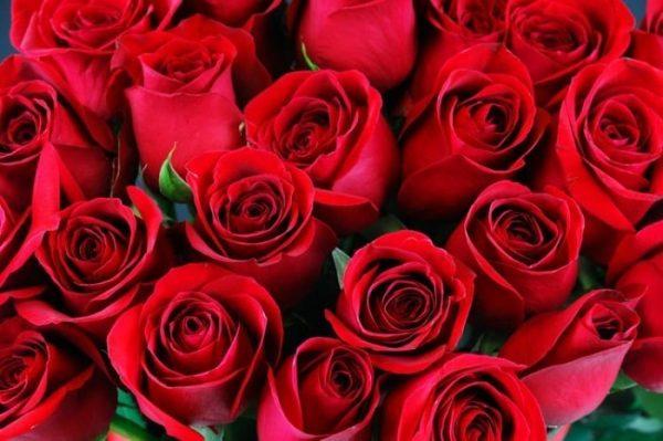 Những loại hoa màu đỏ đẹp nhất