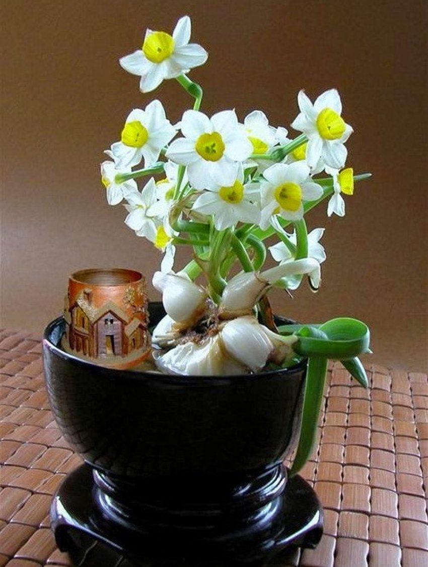 Đặc điểm và cách chăm sóc hoa thuỷ tiên ra đúng Tết