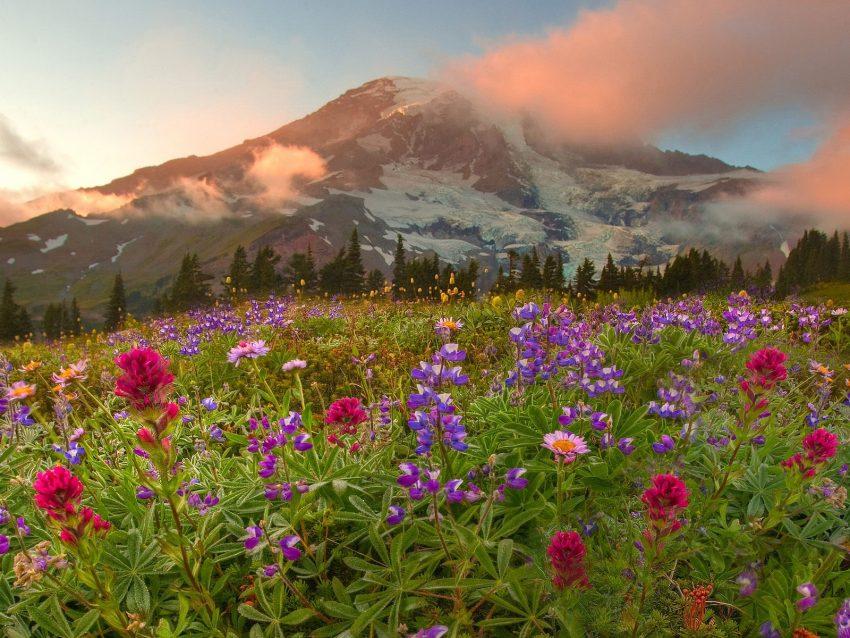Những vườn hoa đẹp nhất thế giới