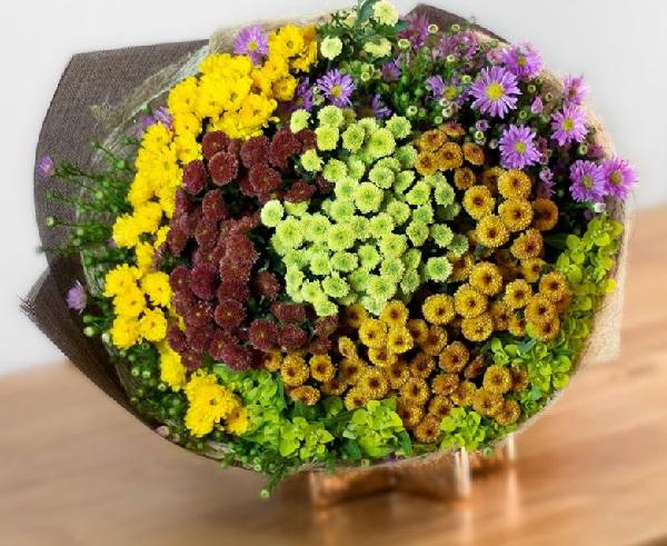 Ý nghĩa của hoa cúc calimero – loài hoa nhỏ bé nhưng đầy kiêu hãnh