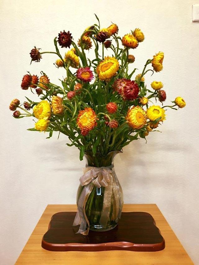 các loại hoa cắm lâu tàn nhất - hoa cúc bất tử