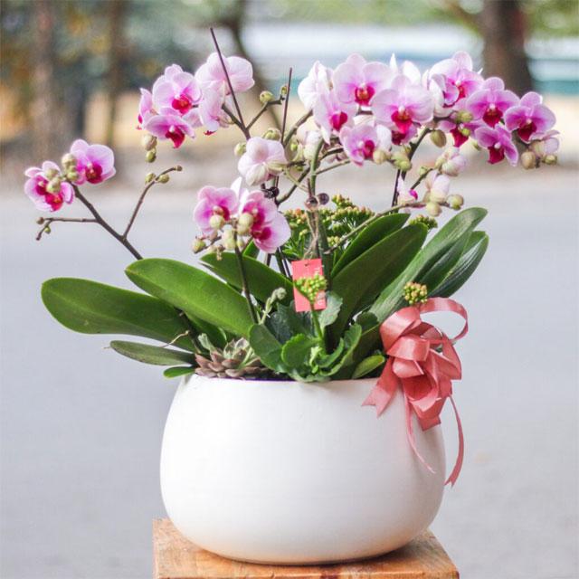 các loại hoa cắm lâu tàn nhất - hoa lan hồ điệp